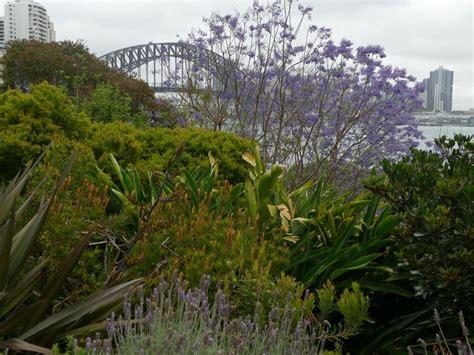 clark park lavender bay wendy s garden sydney