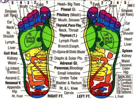 Detox Pressure Points by 20 Best Foot Diagrams Images On Acupressure