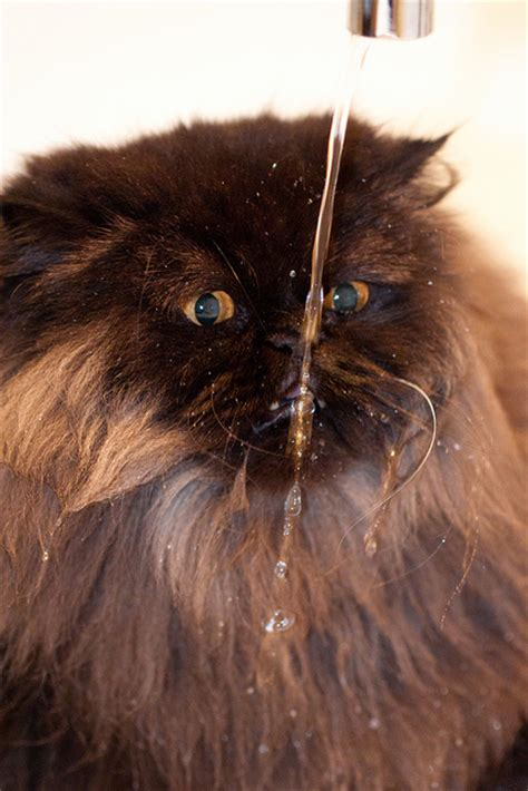 17 cool pictures of cats from water faucets