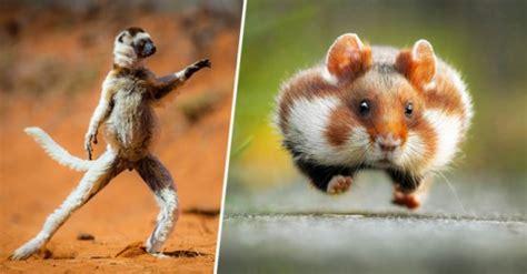 imágenes muy graciosas de animales divertidas fotos de animales haciendo expresiones graciosas
