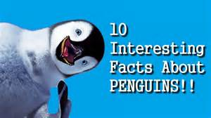 penguin facts for exciting facts about penguins facts about animals volume 18 books 10 interesting facts about penguins hd