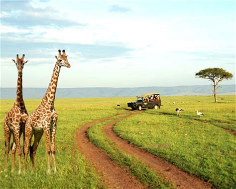 Cheap Africa Vacation Spots   Cheap Safari Vacations in Africa