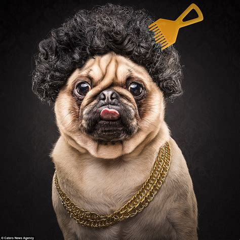 pug with wig adam jackman transforms pugs into cube and 2pac lookalikes daily mail