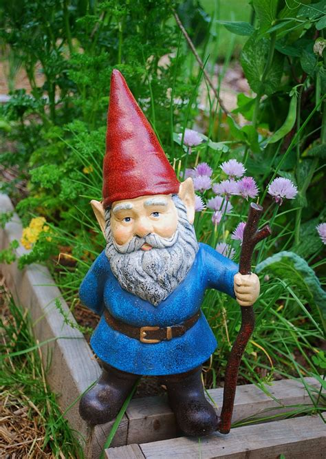 Garden Gnome | garden gnomes anyone