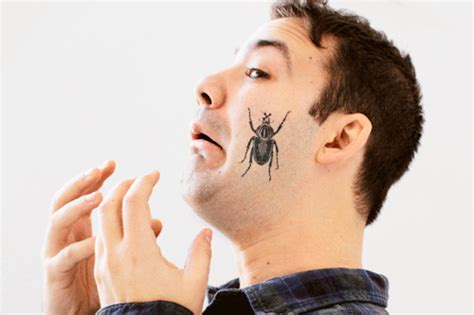 bugs temporary tattoo gif find amp share on giphy