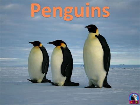 8 Facts On Penguins by 124 Best K 2 Science Technology Resources Images On