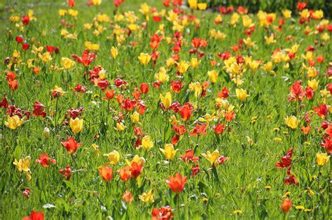 Britzer Garten Abonnement by Stadtlandlebenslust Tulipan Im Britzer Garten In Berlin