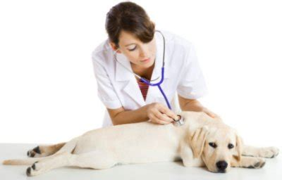 think your veterinarian is here s how to tell