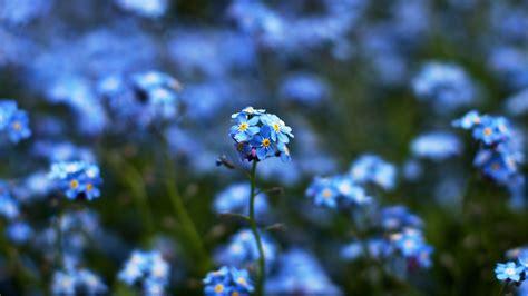 wallpaper flower tumblr blue 精选唯美意境蓝色花海高清图片电脑桌面壁纸 风景壁纸 壁纸下载 美桌网
