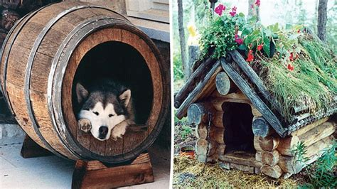 Siberian Husky Dog House Plans Husky House Plans