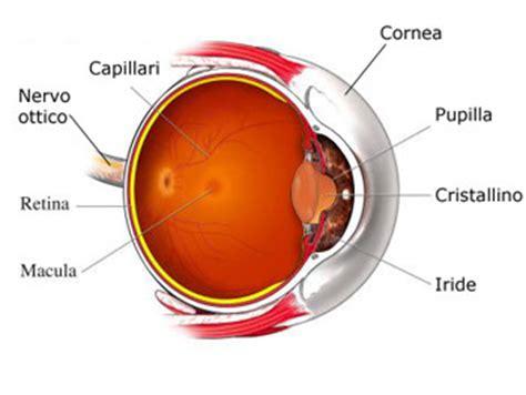 occhio interno anatomia occhio struttura occhio