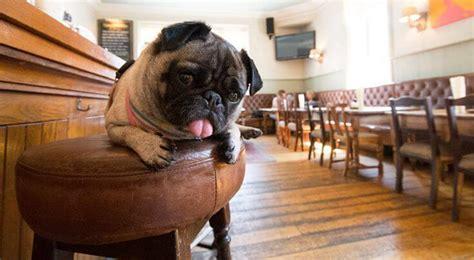 friendly bars denver denver ranked most friendly city in america the denver ear