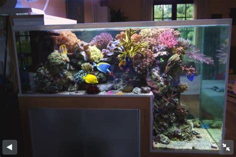 reef aquariums for your inspiration reefland com