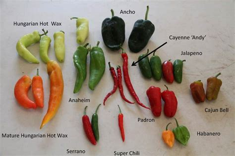 types of garden peppers peppers sweet and heat yard and garden news