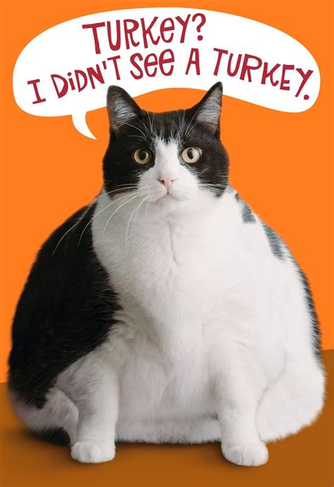 fat cat funny thanksgiving card greeting cards hallmark