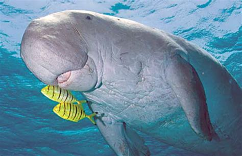 marine animals pictures to pin on pinsdaddy