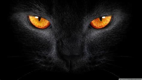 black myth the black cat myth pet attack