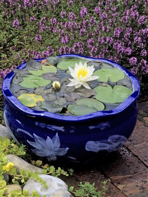 how to plant water lilies planting water lilies hgtv