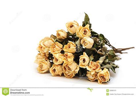 imagenes de rosas secas rosas secas imagen de archivo imagen 25995101