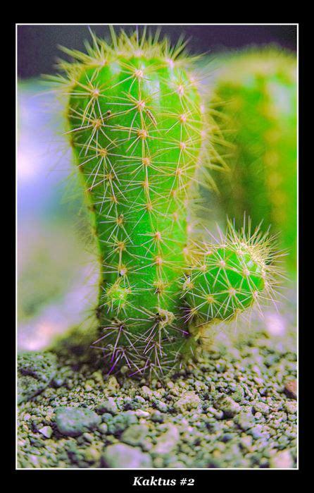 biologi edutainment bab  ciri ciri khusus makhluk hidup