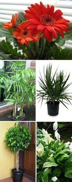 Best Detox Plants by Detox On Detox Meals Detox Your And