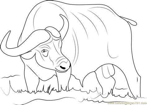 asiatic buffalo coloring page free buffalo coloring