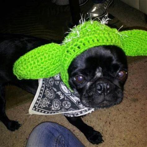 pug dressed up as yoda pug dressed up as yoda costume breeds picture
