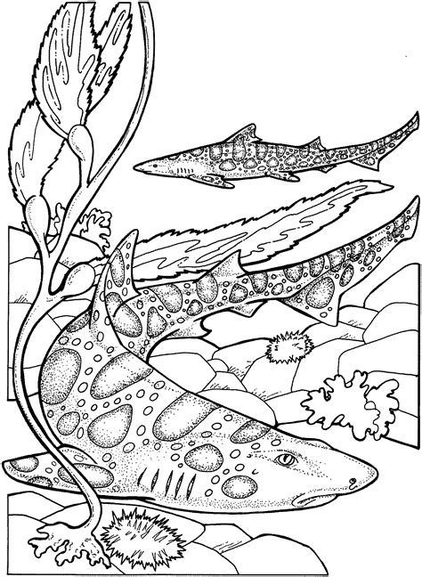 cool coloring pages of sharks coloring pages shark coloring pages free and printable