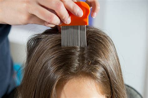 Hair Dryer And Lice 6 home remedies to get rid of lice bebeautiful