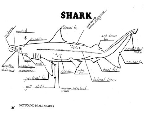 shark anatomy coloring page human anatomy charts page 307 of 351 inner body