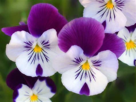 The Flower flowers flowers