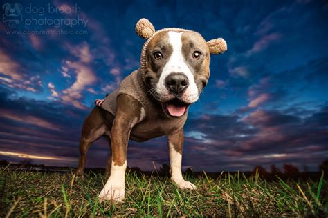 puppy photography 500px 187 the photographer community 187 pet photography