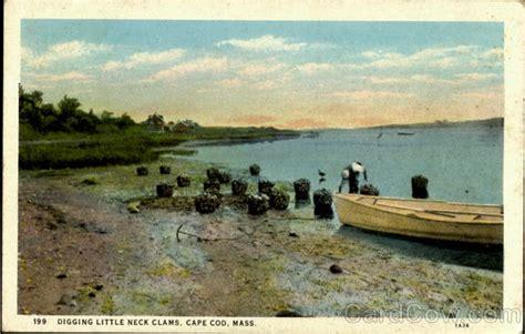 steamers cape cod digging neck clams cape cod ma