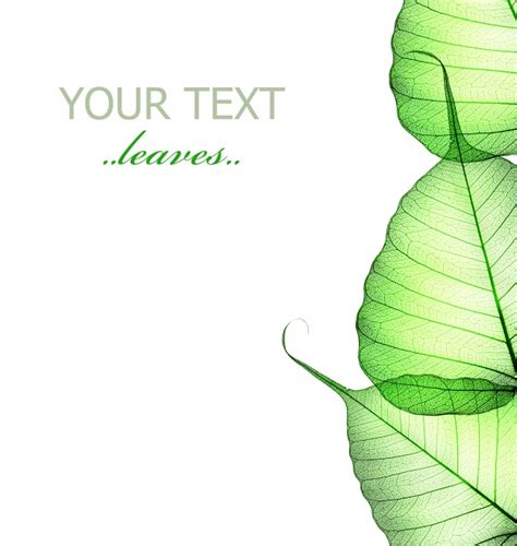 powerpoint design leaf green leaves transparent the background picture over