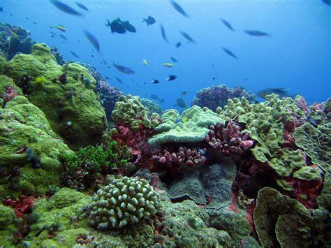 Batu Kerang Laut habitat
