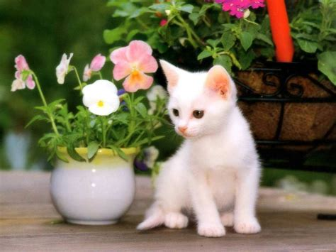 beautiful kittens beautiful naughty cats wallpapers wallpapers pictures