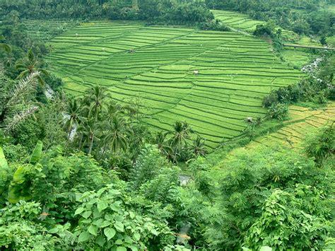agriblog potensi pertanian  perikanan indonesia