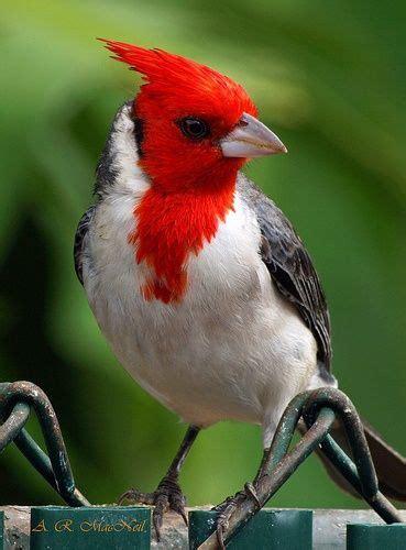 imagenes unicas en el mundo mejores 108 im 225 genes de aves unicas en el mundo en pinterest