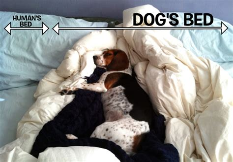 Why Do Dogs On The Bed by The Secret Reasons Why Humans Should Be Allowed In Beds