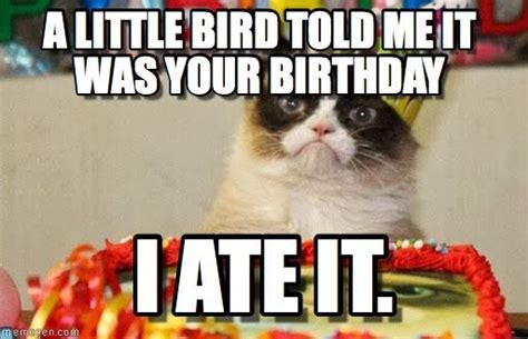 Grumpy Cat Happy Birthday Meme - grumpy cat birthday bird meme grumpy is my friend