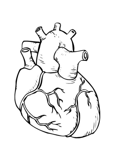 Human Anatomy Coloring Page Az Coloring Pages Human Coloring Pages