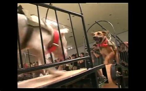 dogs that cannot touch each other guggenheim censureert expositie wegens bedreigingen digitale kunstkrant
