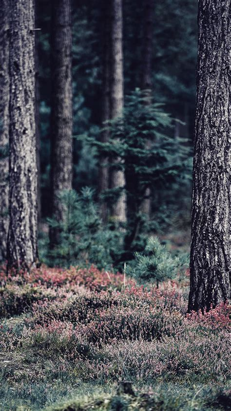 bringing  forest      iphone  wallpapers