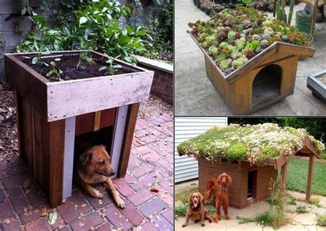 green dog house green roof dog house simplicity is the ultimate sophistication
