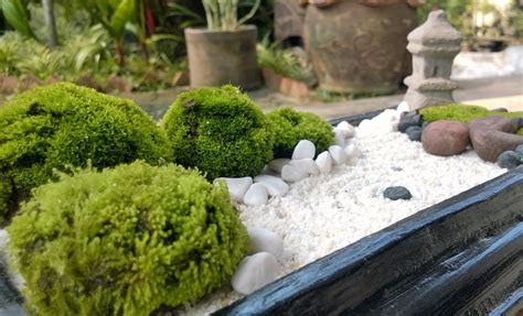 Mini Zen Garden by White Sand Mini Zen Garden Diy Zen