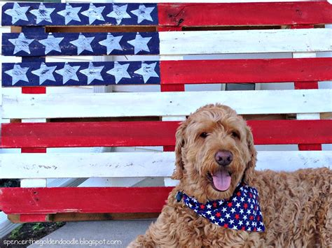retrieve a golden of minnesota spencer the goldendoodle mischief monday ragom calendar