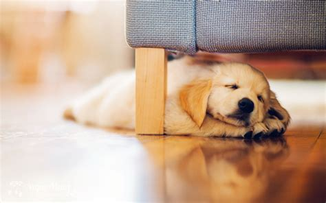 under the couch puppy under couch wallpaper 2560x1600 14050