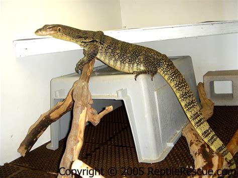 reptile cages water monitors reptile tanks