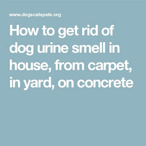 dog pee smell in house 17 best ideas about dog pee smell on pinterest dog pee dog urine remover and pet