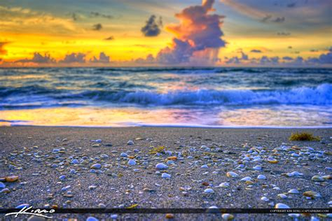 on the beach shells on the beach sunrise at singer island florida
